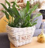 (BC-WF1019) Чисто Handmade естественная корзина цветка вербы