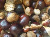 Extrait 20%-98%Aescin de marron d'Inde pour des suppléments alimentaires