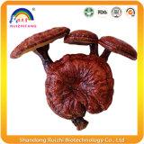 Преимущества здоровья Ganoderma Lucidum Rishi содержат питательные вещества и витамины