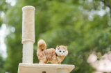 Árbol del gato, casa del árbol del gato, árbol Scratcher del gato
