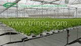 Lettuce를 위한 상업적인 Hydroponics Greenhouse
