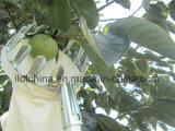 Raccoglitrice staccabile della frutta della testa della maglia di Ilot con il sacchetto della mussola
