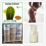 Hoodia Cacus 체중 감소 스테로이드 자연적인 플랜트 추출 CAS 145723-550