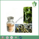 Extrait normal pur Fucoxanthin 5%~20%, Fucoidan 85% de Fucus d'algues brunes de 100%