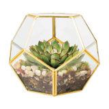 2017 Geometrisch Glas Terrarium voor Bloem