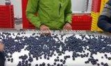Het Sap die van /Fruit van de Lopende band van het Sap van de bosbes Mahiney vullen