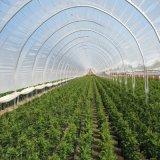 다중 경간 Hydroponic 온실 PC 장 온실 야채 온실