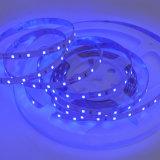 Hohes Lumen UV380nm SMD 2835 LED Streifen mit CER RoHS