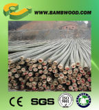 High Quality Straight Farming Bamboo Poles