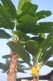 Albero di banana artificiale delle piante di buona qualità di Gu-Yd1333166