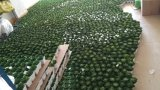 Piante e fiori artificiali di mini pianta Gu-SD0301 succulente