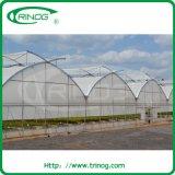 hydroponic 양상추를 위한 농업 Film Greenhouse