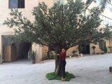 옥외 화분에 심는 인공적인 올리브 나무 Bonsai