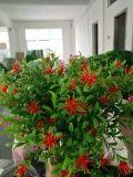Piante di alta qualità e fiori artificiali dei cespugli Gu0205162951 dell'erba