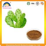 Extrait végétal Extrait de cactus Poudre Perte de poids