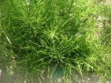 Extracto de hierba Extracto de cola de caballo natural Sílica orgánica 7% CAS No .: 71011-23-9