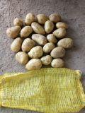 Aardappel/Verse Aardappel met Beste Kwaliteit