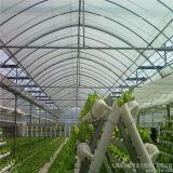 Парники с оросительными системами для салата