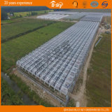 Planting를 위한 좋은 Appearance High Quality Glass Greenhouse
