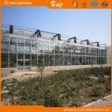 Planting Vegetables를 위한 필름 Roof Glass Wall Greenhouse