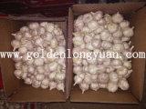 Export-Standardkarton, der frischen normalen weißen Knoblauch packt