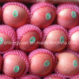 Gute Qualität für Verkauf frischer roter Apple