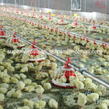 Broiler를 위한 가득 차있는 Set Automatic Poultry Control Shed Equipment