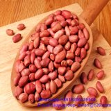 Grain de bonne qualité d'arachide de nourriture biologique