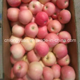 Neue neue rote Gala Apple (138/150/175/198#)