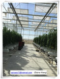 Wasserkultursystem PC Blatt-Gewächshaus für Blumen