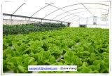 Дом коммерчески Hydroponic пленки Multispan зеленая для поленики