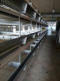 Jaula de la capa/batería del huevo del pollo del sistema automático de la fabricación