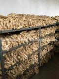Nueva Cosecha fresca y jengibre seco para el Reino Unido