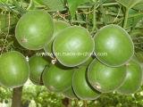 Auszug Mogrosides 25% 40% Mogroside V Luo-Han Guo