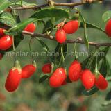 Colore rosso organico Goji dell'alimento salutare della frutta secca dell'ETB della nespola