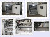 Incubadora Ew-2112 da máquina da incubação do ovo da galinha da fonte da fábrica de Hhd