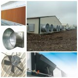Set pieno Poultry Farm Equipment per Broiler