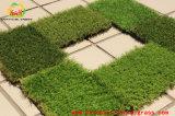Relvado artificial aprovado do GV da grama chinesa para ajardinar o gramado