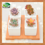 Cuatro Combination Square Ceramic Succulent Pot con Bamboo Stand