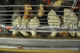 Piekeraar Chicken Cage (het type van H)
