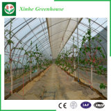Invernadero vegetal de la película plástica de la flor comercial