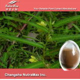 16:1 naturel d'extrait de 100% Shuizaojiao, 10:1, 16%, 8%, 20%, flavanol