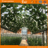 Production elevado Glass Greenhouse para Agricultural Planting