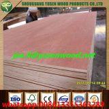 Contre-plaqué de Bintangor de dos de bois dur de faisceau de peuplier