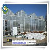 꽃을%s Aquaponics 다중 경간 유리제 온실