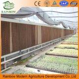 판매를 위한 농업 장비 다중 경간 Po 필름 온실