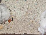 Het Zand van de Kat van de premie dat van de Klei van het Bentoniet met Verse Geur wordt gemaakt