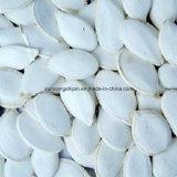 Минимальная цена семян тыквы нового снежка урожая белая