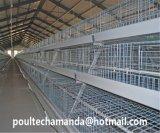 유형 프레임 보일러 층은 최신 판매 보일러 닭장 감금소를 위한 시스템을 감금한다