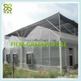 O arco conduz a casa verde agricultural de película plástica